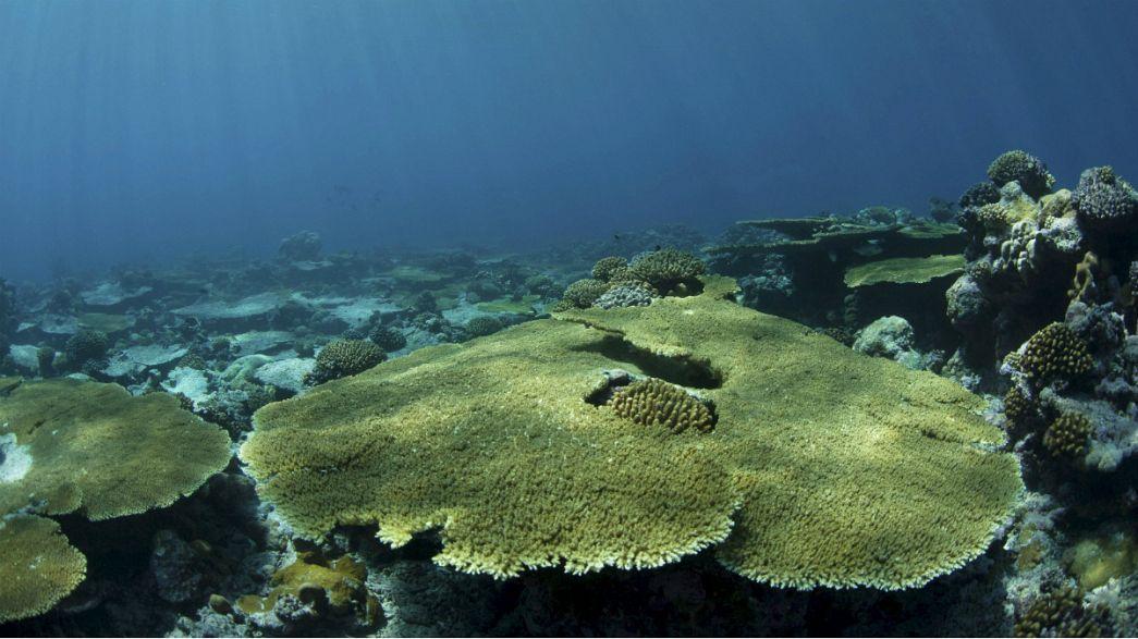 Journée mondiale de l'océan : les fonds sous-marins dans Google Street View