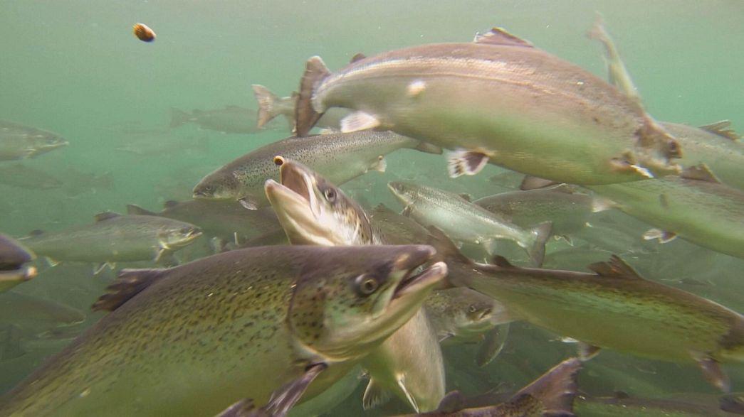 ¿Es seguro el pescado que comemos?