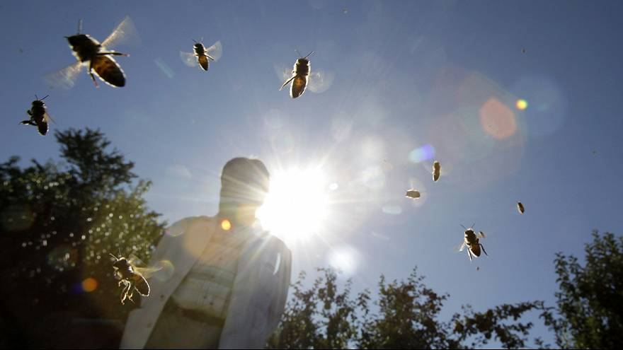 França quer salvar as abelhas