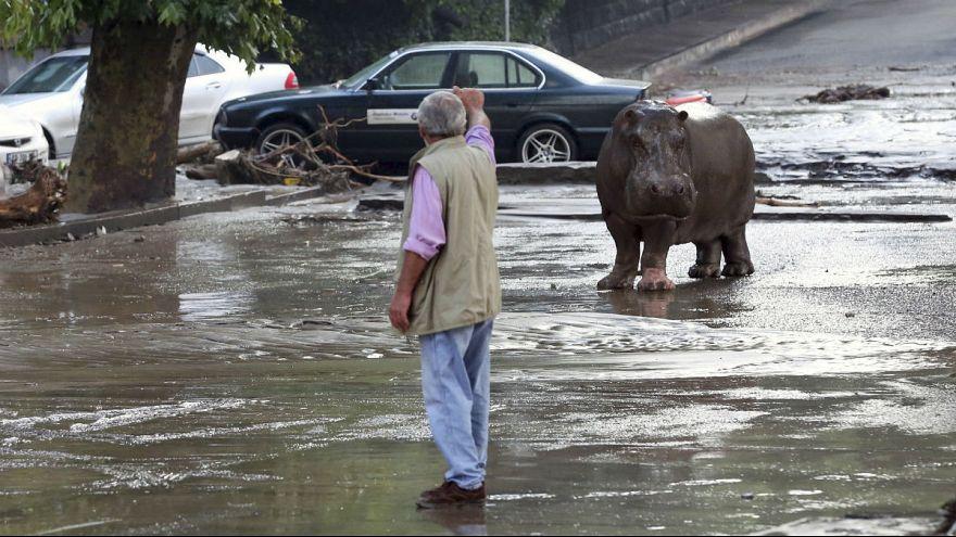 Tiflis'te hayvanat bahçesini su basınca vahşi hayvanlar serbest kaldı