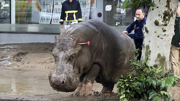 Dangerous animals escape on to the streets of the Georgian capital after floods that killed at least nine people