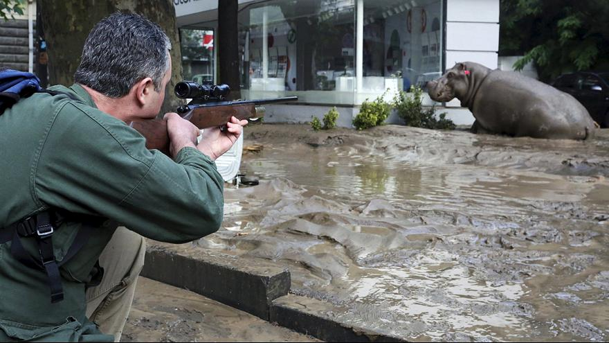 Animals escape zoo after heavy flooding in Tbilisi