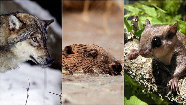 EU's most precious nature sites facing 'biggest threat in decades'