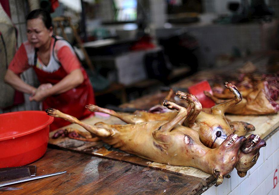 Chine : le festival controversé de la viande de chien