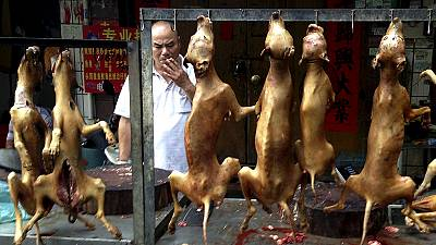 Protest over dog meat festival in China