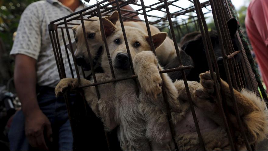 Canines consumed in Chinese meat festival