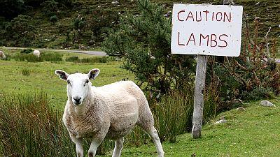 Wer hat das grüne Gen-Schaf gegessen?