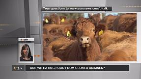 En Europa, ¿podemos toparnos en nuestros platos con carne o leche procedentes de animales clonados?