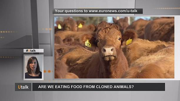 Food from animal clones: what European citizens need to know