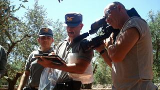 Battle for Italy's olive trees: deadly bacteria devastating groves in Apulia