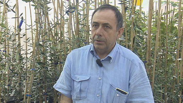 Donato Boscia: gli ulivi nel mirino della Xylella