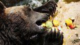 Giacchioli e frutta fresca per gli animali dello zoo