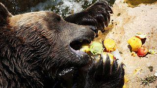 پذیرایی از ساکنان باغ وحش با یخ و میوه های سرد