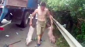 Hundreds of piglets escape from truck on Chinese highway