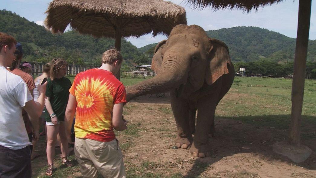 Vacaciones extraordinarias: cuidar elefantes, lanzar cohetes ... todo fuera de norma