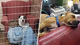 Shelter dogs get comfy chairs