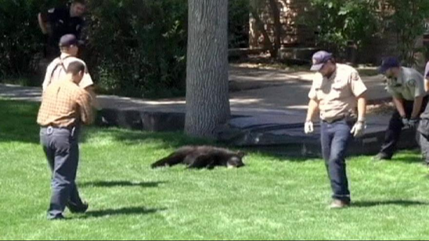 Chute de plusieurs mètres pour un ours