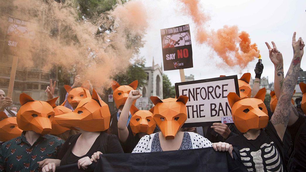 İngiltere'de tilki avı yasağı tartışması