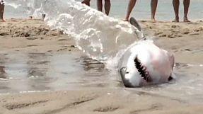 Beachgoers save stranded great white shark
