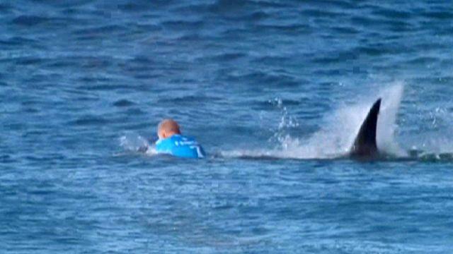 الرياضي مايك فينينج ينجو بأعجوبة من هجمة قرش على الهواء
