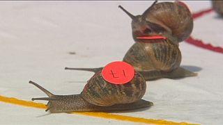 ''Georges'' remporte le championnat du monde de course d'escargots