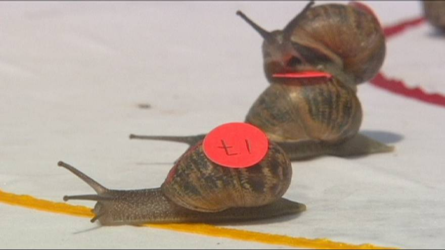 World Snail Racing Championships