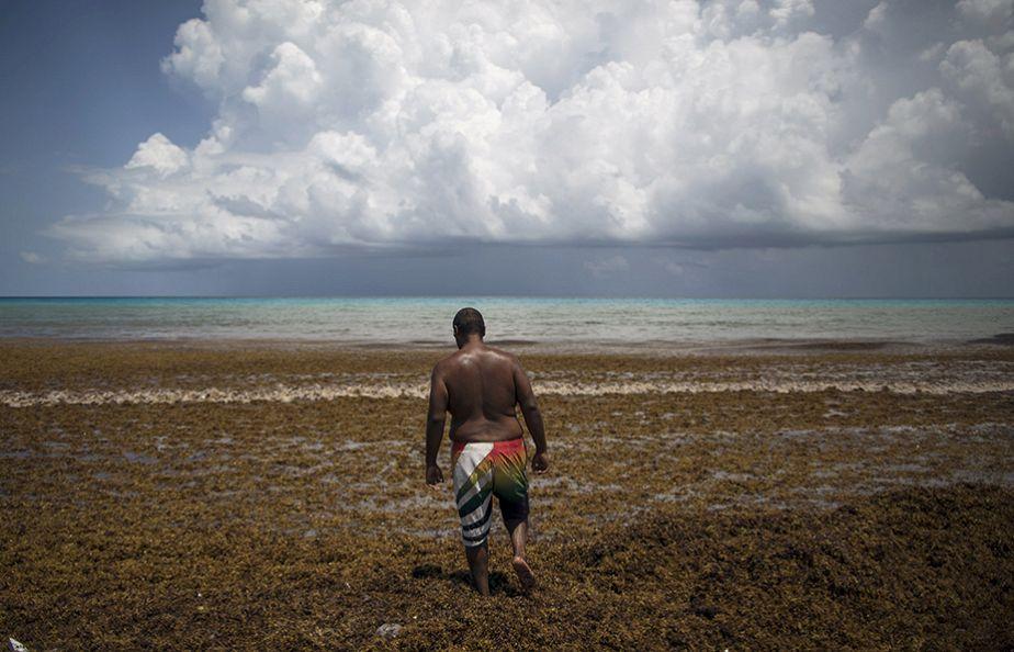 Un tapis d'algues sur une plage de Cancun