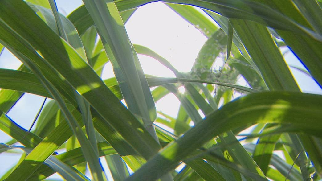 Do you know: can grass save the planet?