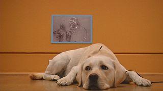 Los perros toman el museo Kupferstichkabinett de Berlín