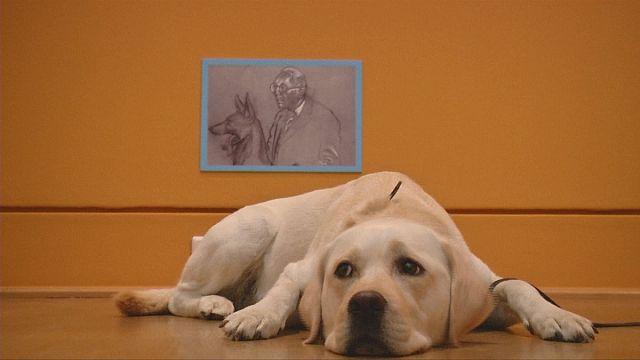 الكلاب، محور معرض فني في برلين