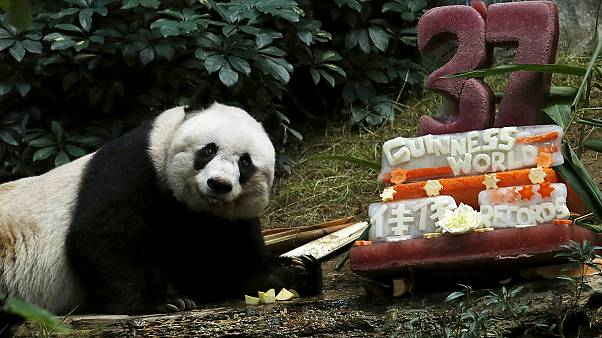 Η Jia Jia έγινε το γηραιότερο πάντα στον κόσμο και το γιορτάζει!