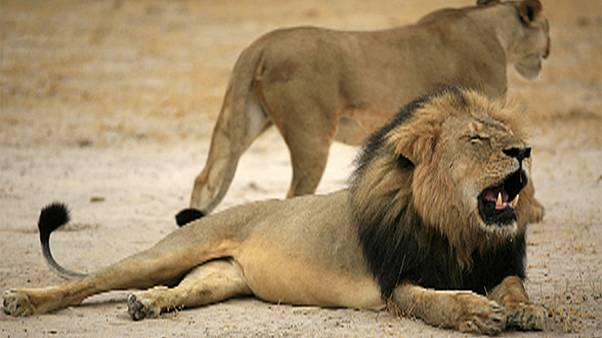 Hunting operator charged over killing of Cecil the lion