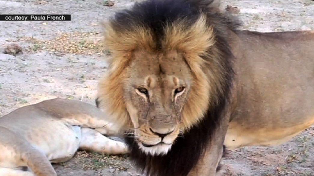 Löwenjagd löst Shitstorm aus