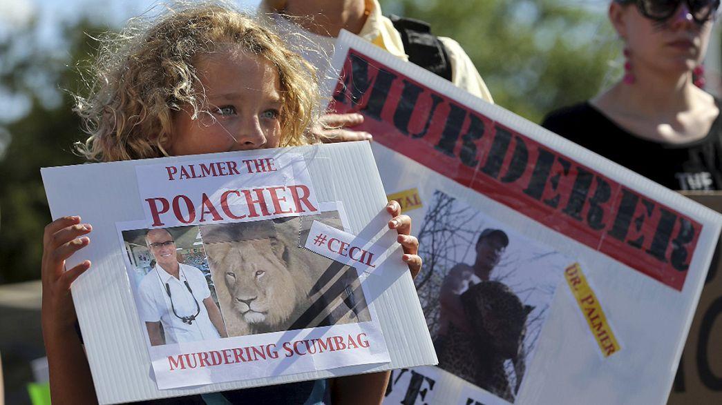Löwe Cecil: Jagdorganisator auf Kaution freigelassen