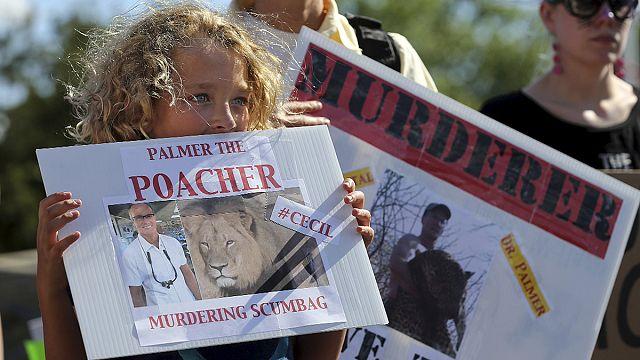 Afrika'nın ünlü aslanı Cecil'in davası 5 Ağustos'ta