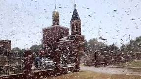 Invasion of the locusts in Russia