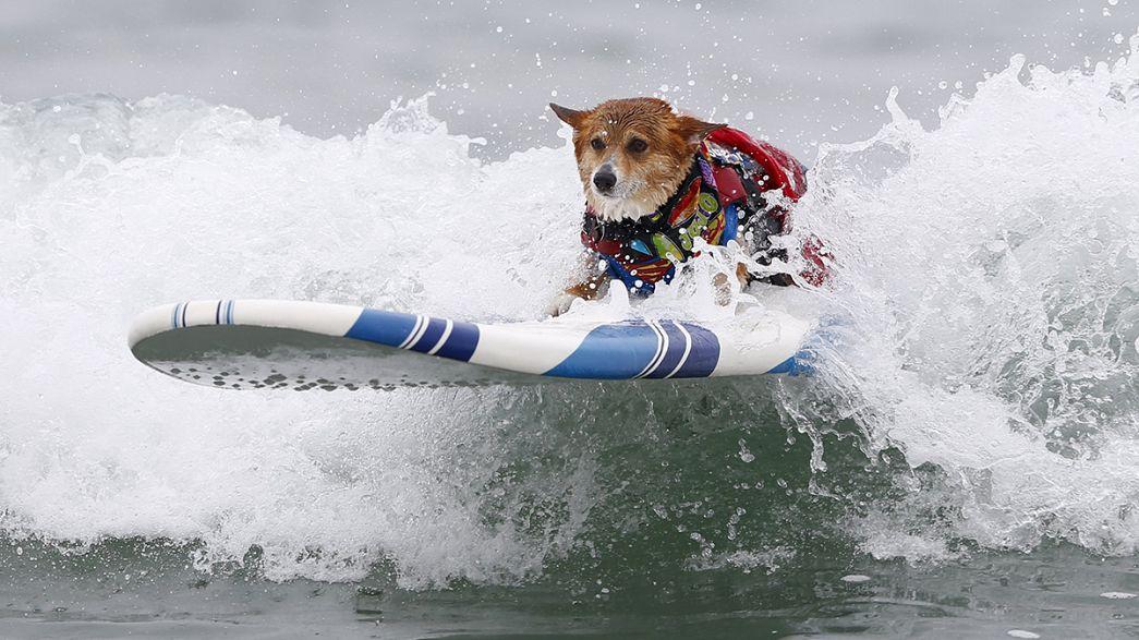 Competición canina sobre las olas