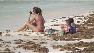 Maré de algas deixa Cancún em desespero