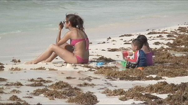 المكسيك و الأعشاب البحرية