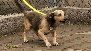 Είναι καλή ιδέα φυλακισμένοι για κακοποίηση ζώων να φροντίζουν σκυλιά;
