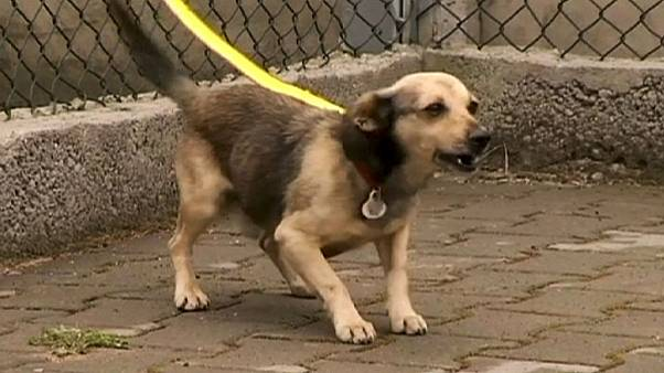 Putting dogs in the care of animal cruelty criminals: a bad idea?