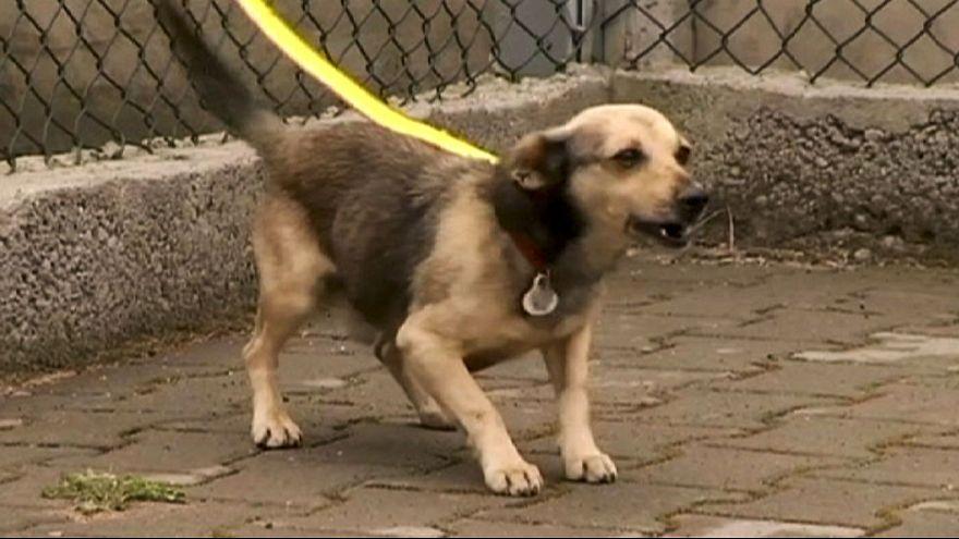 Colocar cães ao cuidado de pessoas que maltratam animais: Uma má ideia?