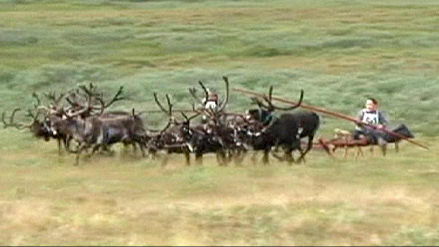 Reindeer racing in Russia