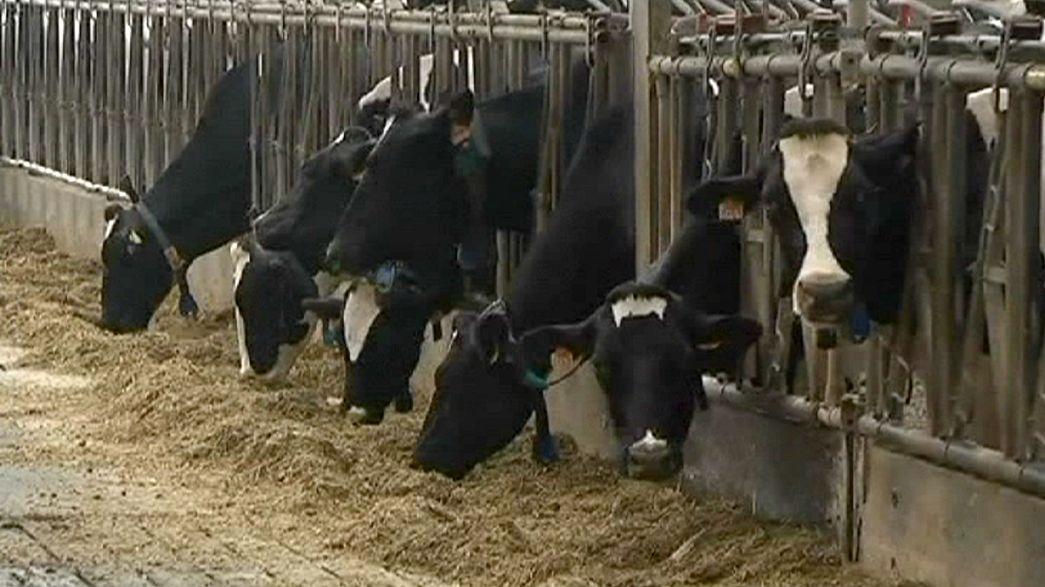La tuberculosis bovina en Bélgica pone en cuarentena a más de 150 granjas