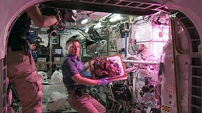 Raccolto spaziale, l'insalata si coltiva in orbita