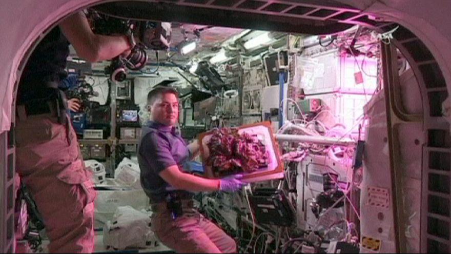 Los astronautas se comen la primera lechuga cultivada en el espacio
