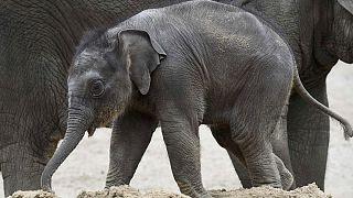 روز جهانی فیل، مروری بر دلایل کم شدن نسل این حیوان