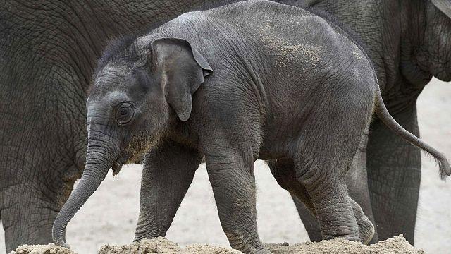 La Giornata mondiale degli Elefanti