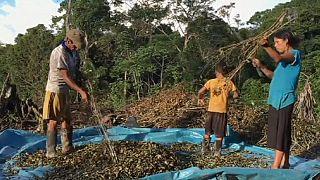 Combate à produção de folha de coca deixa milhares de peruanos na miséria
