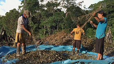 Perù: la lotta al narcotraffico affama i campesinos
